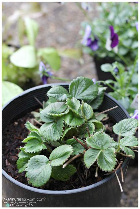 DIY edible mini garden