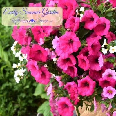 early summer garden katherines corner