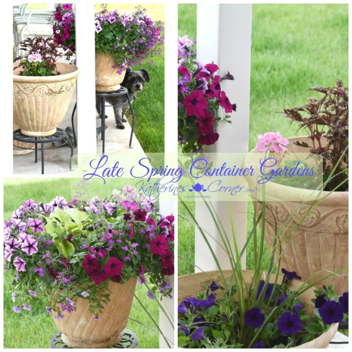 late spring early summer container gardens