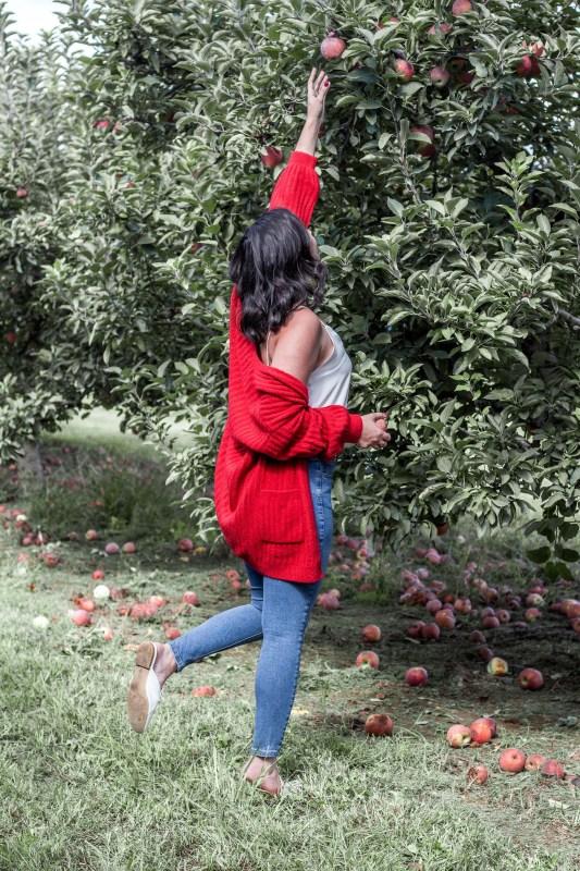 red cardigan apple picking