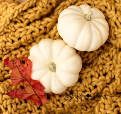 decorative mini pumpkins