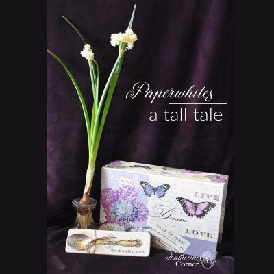 paperwhites a tall flower with silver spoon katherines corner