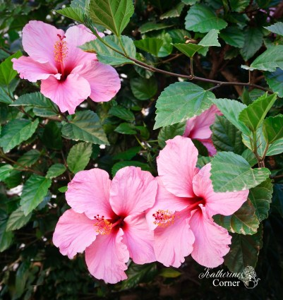 pink tropical flowers