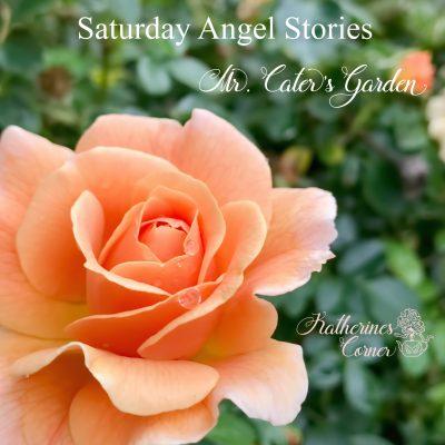 saturday angel stories mr caters garden