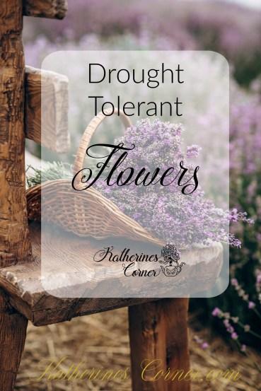 drought tolerant flowers