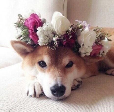 dog in the wedding