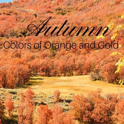 autumn colors of Orange and Gold in utah