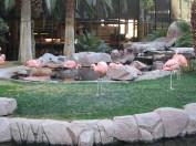 Flamingos at the Flamingo.