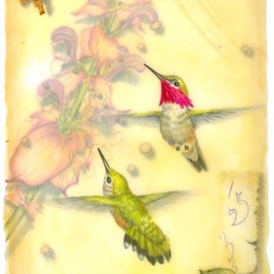 "Kathleen O'Brien, "" Calliope Hummingbird"", Giclee print"