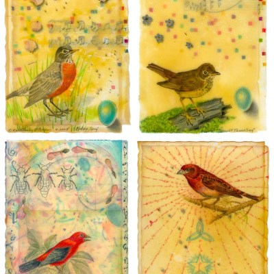 Bird Card Set 6