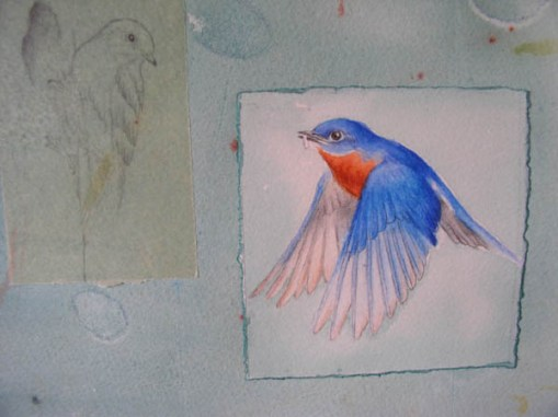 "Kathleen O'Brien, ""Talisman for Eastern Bluebirds"", process, detail of drawings of Bluebirds"