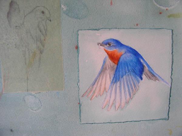 "Kathleen O'Brien, ""Talisman for Eastern Bluebirds"", process, detail of drawings of Bluebirds"