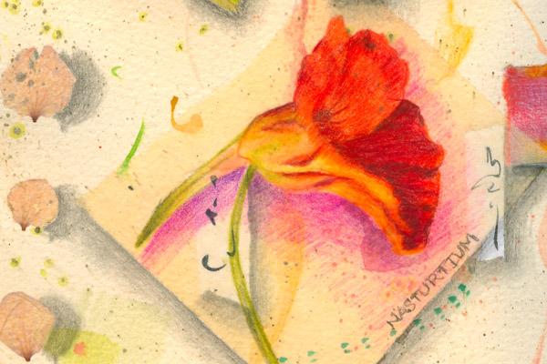"Nasturtium Flower Essence drawing, detail from ""Bee Dream 2"" by Kathleen O'Brien"