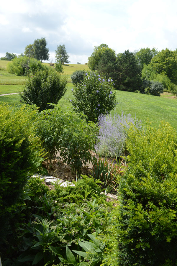 Abundance at Sunwise Farm and Sanctuary July 2016