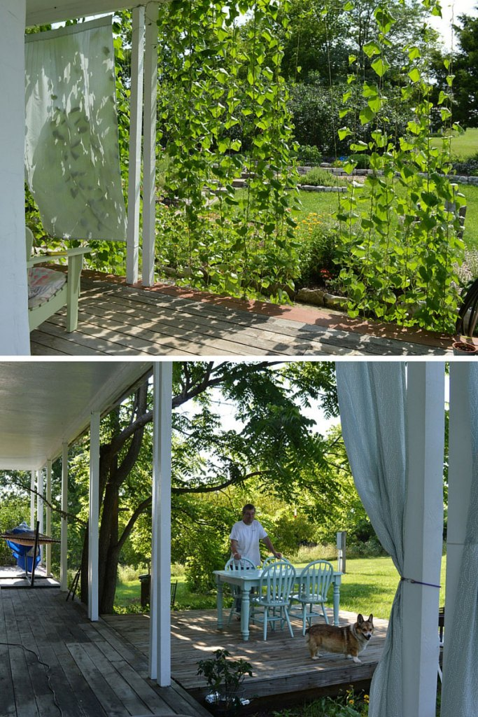 Summer deck & Morning Glory shade at Sunwise Farm and Sanctuary July 2016