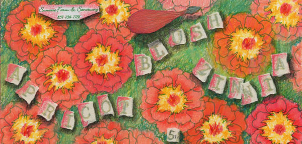 Tag for apricot blush zinnia seeds, 5th generation from Sunwise Farm & Sanctuary