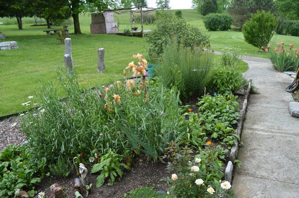 Herb Garden, Longs Garden Iris at Sunwise Farm and Sanctuary