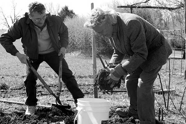 Phillip Gilbert and Greg Orth digging a fig tree, photo by Nick Lacy