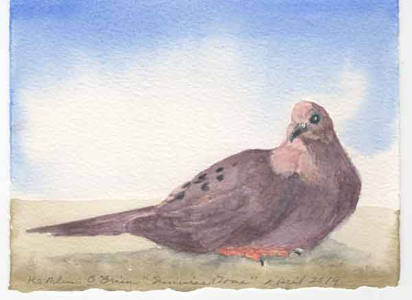 "© Kathleen O'Brien, ""Sunwise Mourning Dove"", watercolor, 2019"