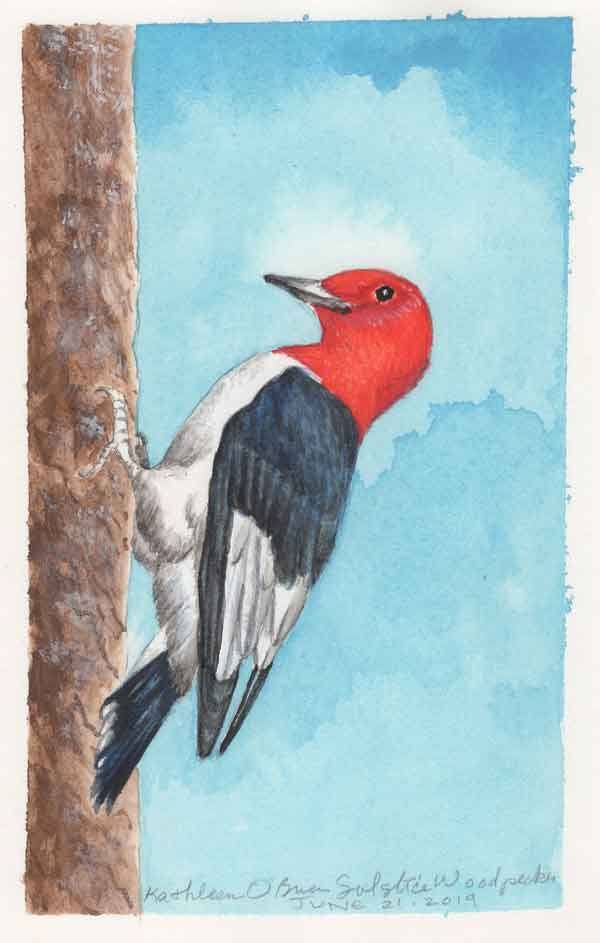 "© Kathleen O'Brien, ""Solstice Woodpecker"", gouache, 2019"