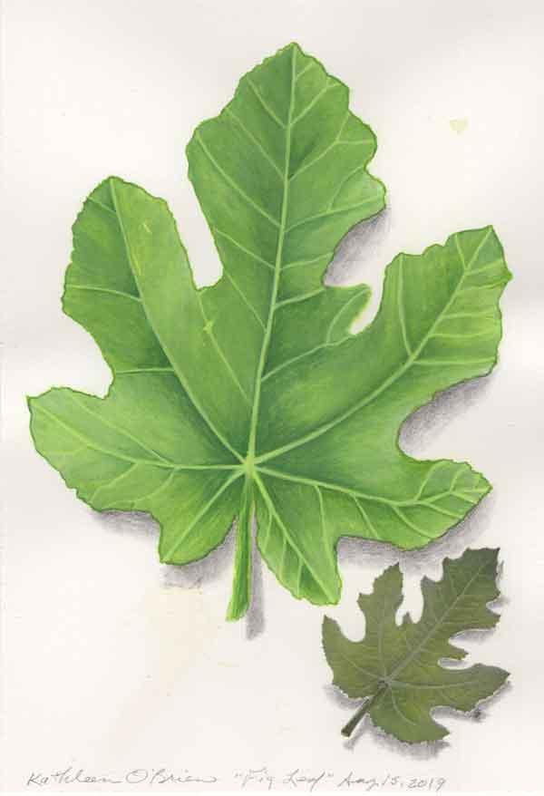 "© Kathleen O'Brien, ""Fig Leaf"", gouache, 2019"
