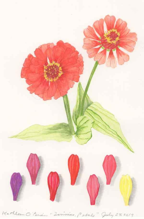 03 Zinnia Petals, © Kathleen O'Brien
