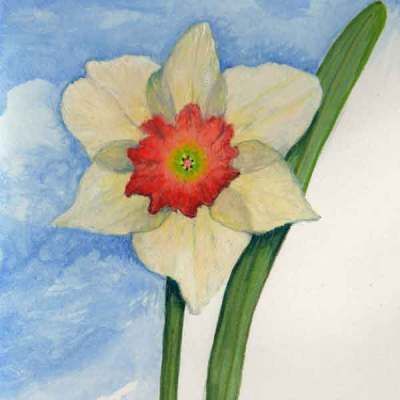 09 First Daffodil,©Kathleen O'Brien