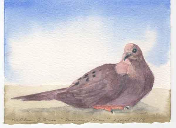 20 Sunwise Dove, ©Kathleen O'Brien