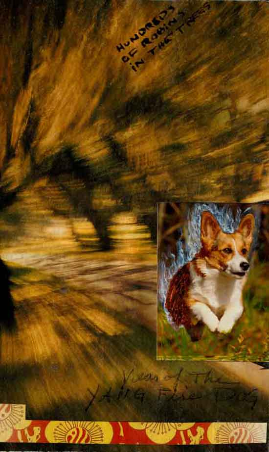 "The first postcard in the ""each day in the year of the fire dog"" series, the back ©Kathleen O'Brien"