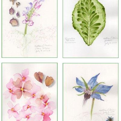 Garden Card set 2