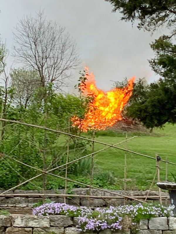 Vine Charcoal Bonfire