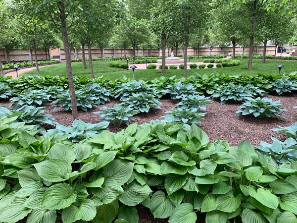 Carol's memorial garden