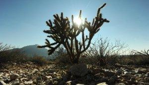 Exploring The Desert, by Gary Coby, Jr.