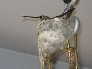 A few years ago, this momma hummingbird made her nest on the chain of our porch swing. We enjoyed watching her as she raised two babies.