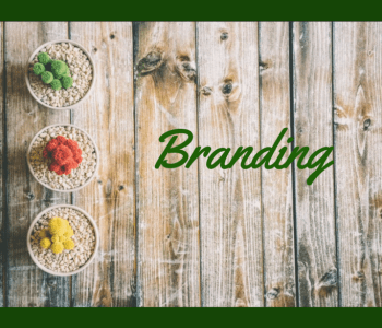 Branding, blogging, writing. Developing your brand. What's a platform
