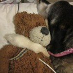 Ginger and her bear :)