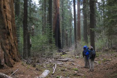 Redwood Canyon 15