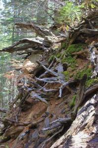 Redwood Canyon 5