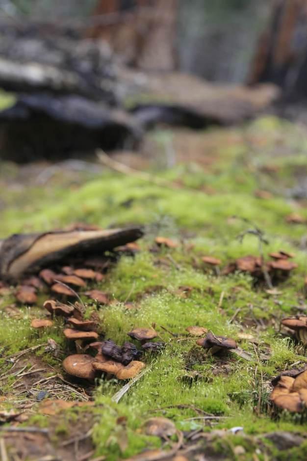 Redwood Canyon 8