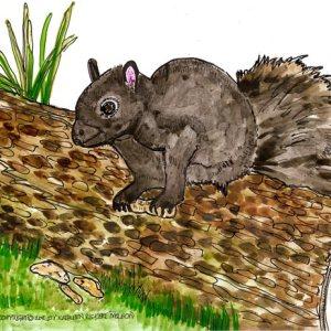 Young-Black-Squirrel