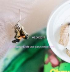 03_06_2017 (8)
