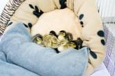 ab ins Nest