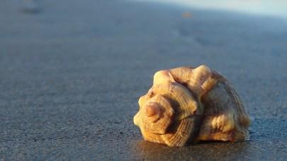 shell-1378433_1920-robeto206