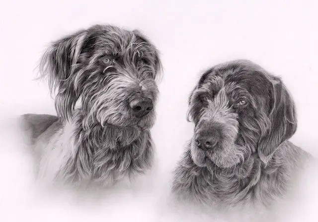 graphite pet portrait, dogs, canine, Kathrin guenther, graphite, drawing, pencil, art