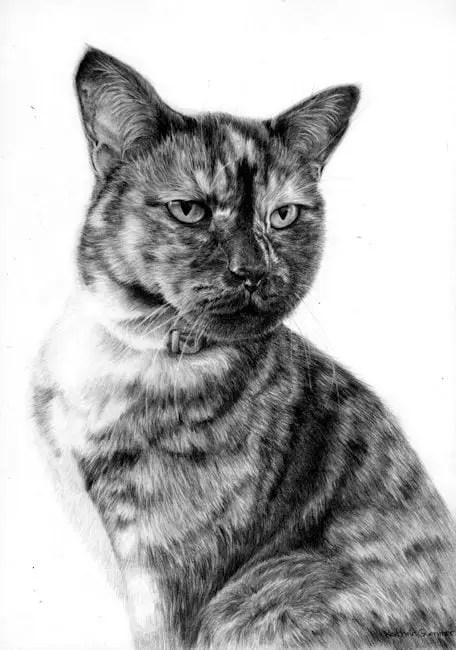 graphite pet portrait, Puss, a Tabby cat drawing by Kathrin Guenther, art, graphite