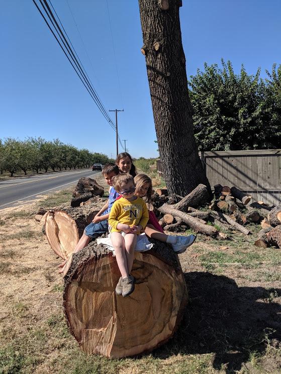 Children sitting on a felled cedar log