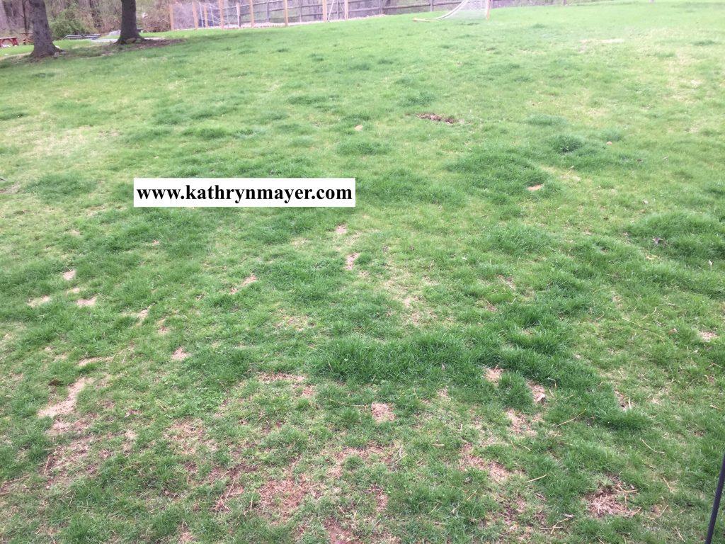 When kids do the yardwork the benefit isn't green grass