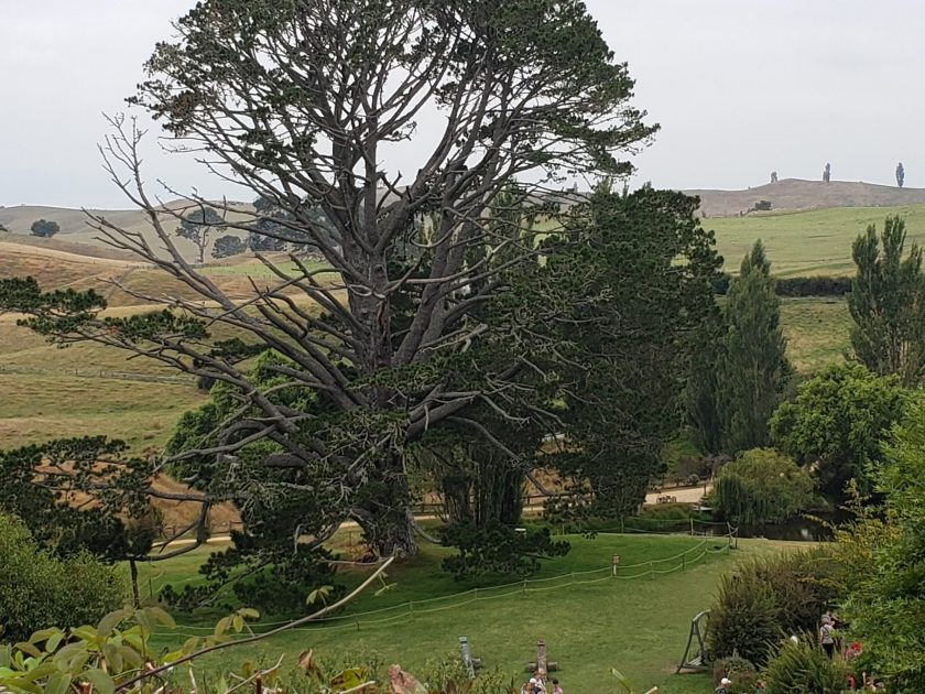 Party Tree at the Shire