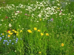 Meadow - Meadow