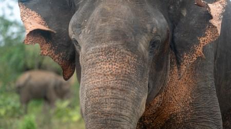 elephant15small